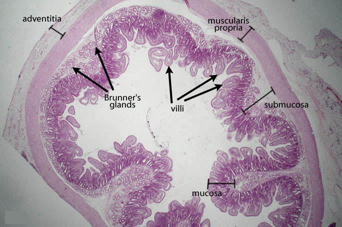 Dartmouth Medical School Anatomy Cells Tissues And
