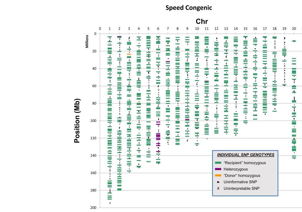 Speed Congenic Map