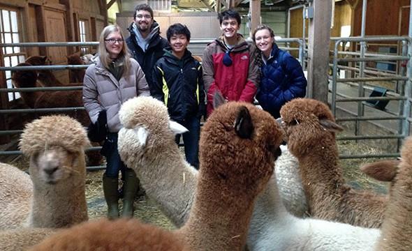 Mark Spaller-Alpaca Group