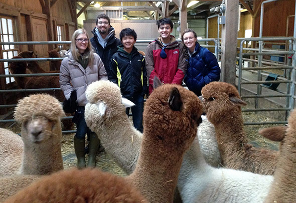On board for the alpaca study visit were (from the left) Tessa Streeter '14, graduate student Nicholas Warren, Yu (Bill) Tang '17, Taylor Watson '16, and Gabriella (Bria) Grangard '16. (Photo by Mark Spaller)
