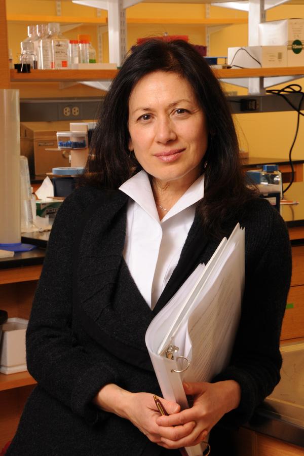Margaret Karagas, PhD. Photo by Jon Gilbert Fox