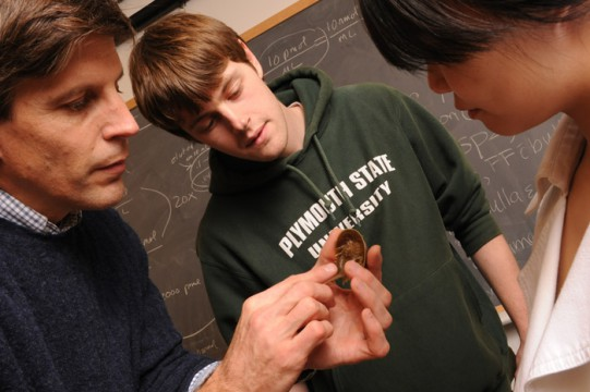 Plymouth State faculty Chris Chabot indicates photoreceptors on a juvenile horseshoe crab to students Matt Sebas and Shiwha Park. (photo by John Gilbert Fox)