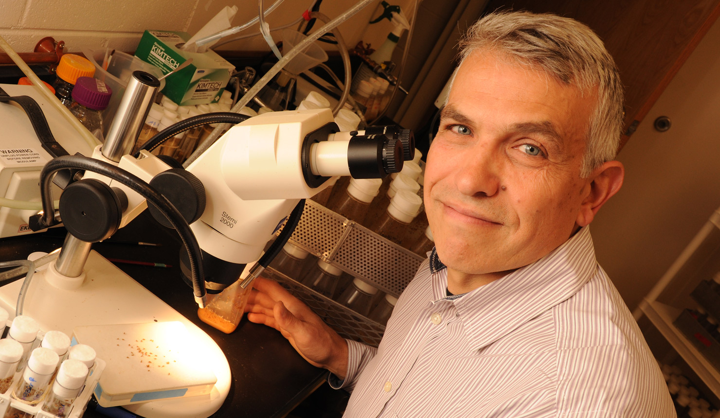 Giovanni Bosco, PhD, is studying fruit flies to help discover the precise molecules and neuronal networks that connect the mind to the body. (photo by Jon Gilbert Fox)