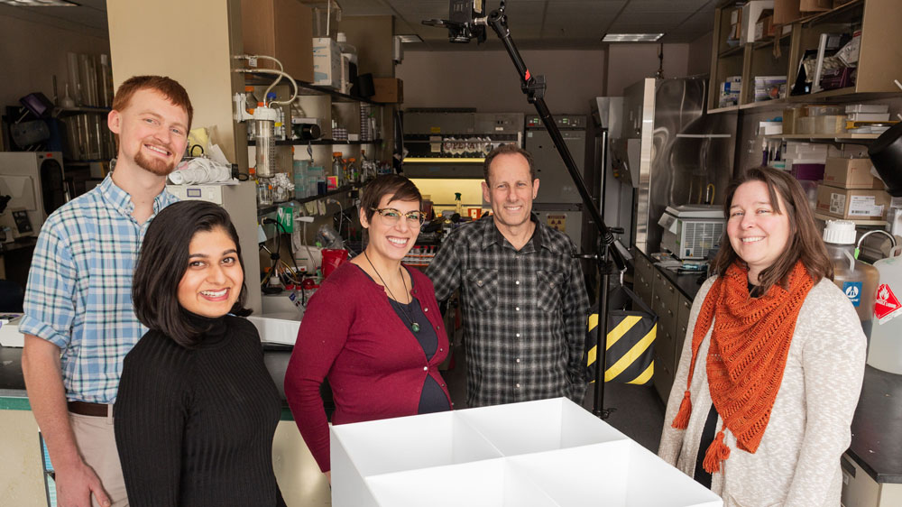 Dartmouth Researchers Offer New Insights into How Maternal Immunity Impacts Neonatal HSV
